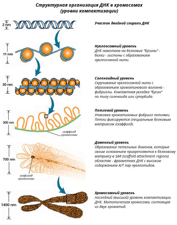 Анализ ДНК что это как делают методы расшифровка где сдать