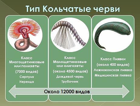 Разделы сайта  biofaqru