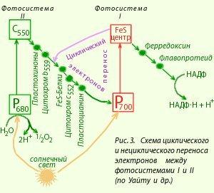 Солнце жизнь и хлорофилл эссе 6471