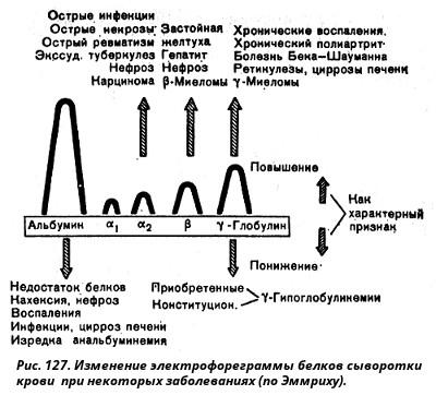 Белковые фракции крови