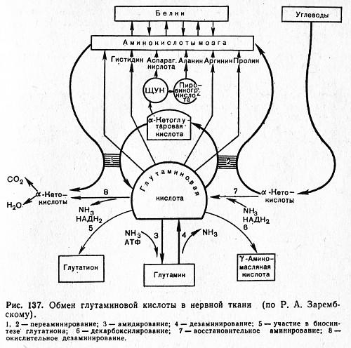 кислоты в нервной ткани