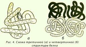 Схемы 4 структур белка