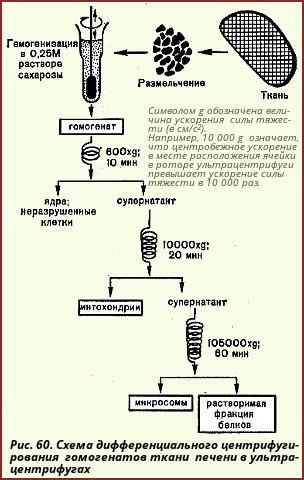 В препаративной энзимологии