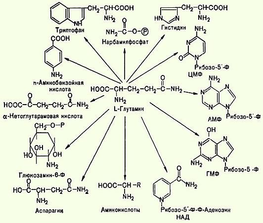 заменимой аминокислотой