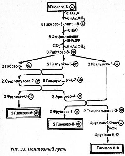 синтеза нуклеиновых кислот