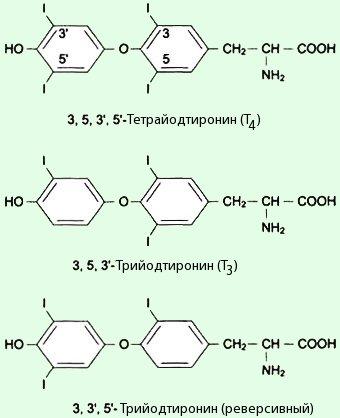 Структура гормонов щитовидной