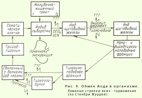Обмен йода в организме