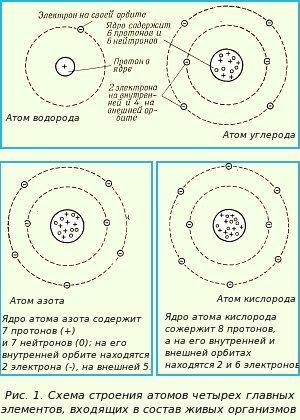 В центре атома, подобно Солнцу