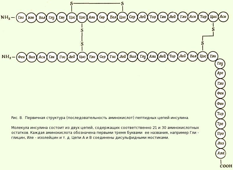 Рибонуклеаза фото