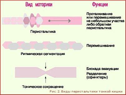 Усиленная перистальтика кишечника как лечить