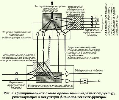 регуляции вазомоторного
