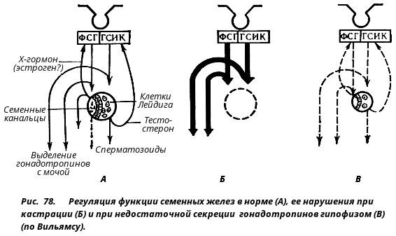 Препарат аденомы простаты