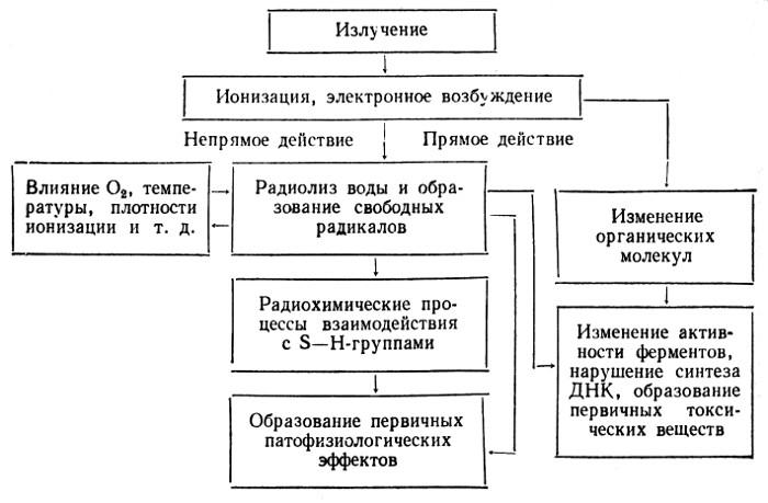 Лучевой
