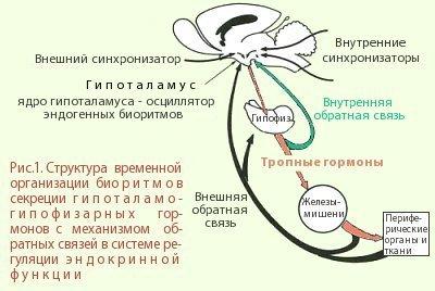 slavyansk-na-kubani-blyadi