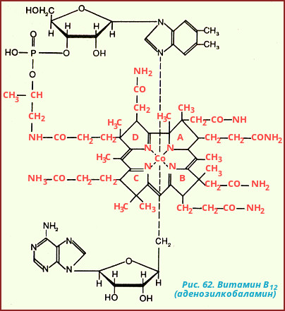 aafba5ef29b6 Питание - составная часть обмена веществ