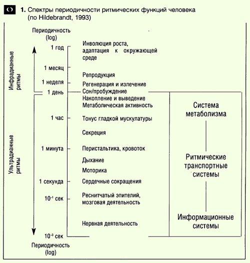 Спектры биоритмов