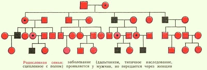 Как узнать свою родословную по фамилии