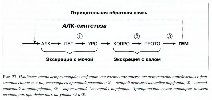 Копропорфирин фото