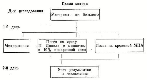 колоний стафилококка