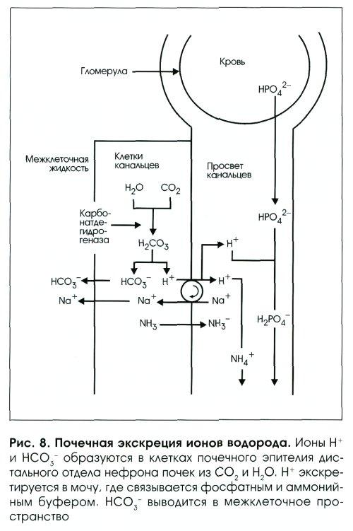 Исследование кала - 3