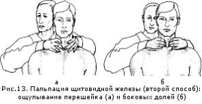 щитовидная железа нормальная фото