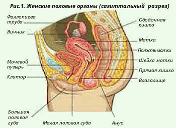 личные фото женских гениталий