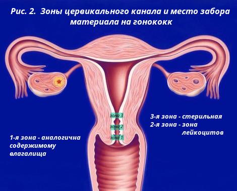 Женские гениталии реальные фото, красивые эротические видео м и ж