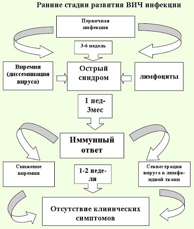 Стадии развития ВИЧ инфекции
