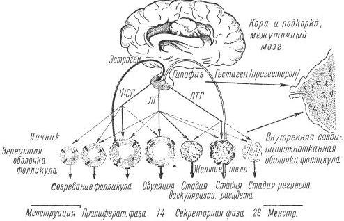 Схема циклических изменений