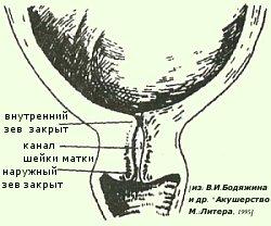 Внутренний зев на 38 неделе беременности
